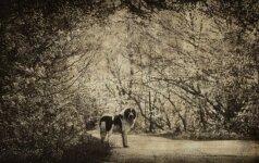Gyvūnai vaiduokliai: šiurpiausios vietos, kuriose klaidžioja jų šmėklos