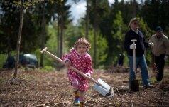 Anykščių miškų urėdija balandžio 16 d. organizuoja medžių sodinimo talką