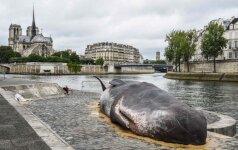 Paryžiaus banginis