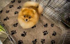 Nuo kitų metų kačių, šunų ir šeškų savininkų laukia didelė naujovė