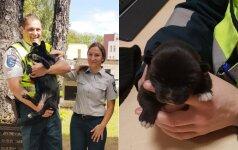 Jaudinantis susitikimas: šunelis, kurį išgelbėjo pareigūnai, grįžo jiems padėkoti