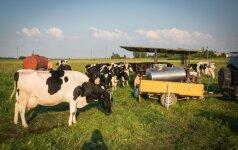 Pieno perdirbėjai įžvelgia žaliavos pigimo galimybę