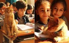 Benamis katinas užklydo į mokyklą ir jo gyvenimas tapo visiškai kitoks