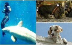 Gyvūnai didvyriai: drąsiai puolė gelbėti žmonių gyvybių