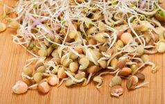 15 dažniausių klaidų daiginant sėklas