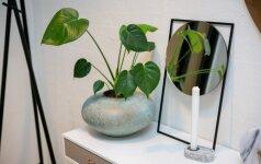 Ant bangos: patarimai ir triukai, kurie padės moderniame interjere rasti vietos augalams