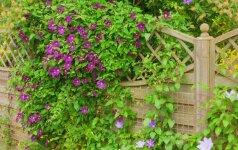 """""""Garden Style"""": kaip paslėpti sklypo trūkumus"""