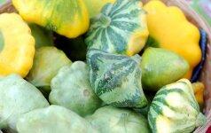 Patisonai: auginimo ir priežiūros ypatybės