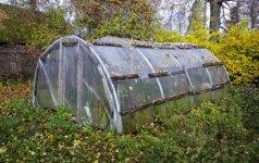 Agronomas pataria, kaip šiltnamį paruošti žiemai