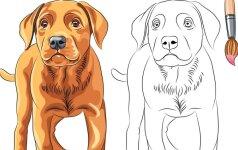 Perkantiems šunį: kas tai yra veislės brokas