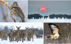 Žiemiška gamta: nuostabūs gyvūnų portretai