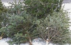 Paskelbtos vietos, kur bus galima palikti nupuoštas kalėdines eglutes