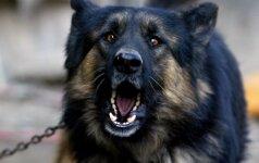 Triukšmaujančių gyvūnų šeimininkus siūloma bausti iki 300 eurų