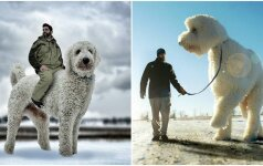 Nustebino visą pasaulį: tokio šuns dar nematėte