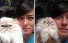 Ne pačios laimingiausios katės pas veterinarą