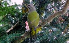 Lesyklos paukščiams: kaip įrengti, kada ir kaip lesinti?