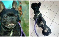 Tragiškas Dragio likimas: buvusi šeimininkė tikina, jog tebegyvas šuo palaidotas jos kieme