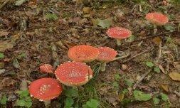 2014 rugsėjis. Štai kiek grybų užaugo / S. Paltanavičiaus nuotr.