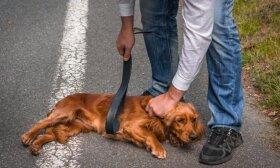 Gyvūnų skriaudėjų laukia didžiulės baudos: Seimo komitetas pritarė, kad jos siektų iki 6000 eurų