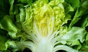 Kaip žiemą vazonėlyje užsiauginti salotų