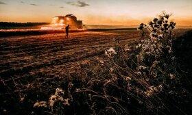 Pasaulinį maisto tiekimą žlugdo sausros, potvyniai ir šalnos: gresia dar didesnis kainų augimas