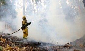 Miškininkai prašo gyventojų atsargumo: šiemet miškuose jau kilo 45 gaisrai