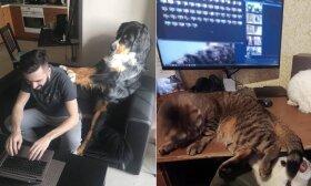 Darbas namuose: parodė, kaip į karantiną reaguoja naminiai gyvūnai