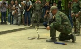 """""""Cobra Gold"""" pratybos Tailande: kobrų gėrimas ir skorpionų užkandis"""