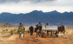 Matekos gyvenvietė Lesote