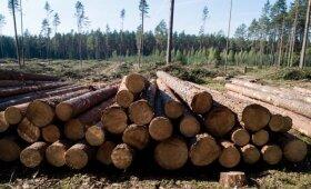 Miško kirtimas Labanoro girioje