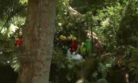 Nufilmuota, kaip Madeiros saloje ant minios nuvirsta medis