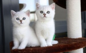 """Katės, kurias galėsite išvysti parodoje /Felinologų draugijos """"Bubastė"""" nuotr."""