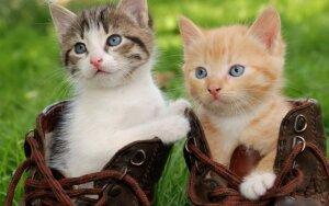 Pagrindinės kačių elgesio problemos