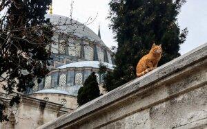 Kas sieja Stambulą, kates, knygas ir politiką