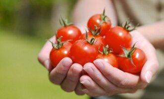 Pomidorai – nauja alternatyva vaistams?