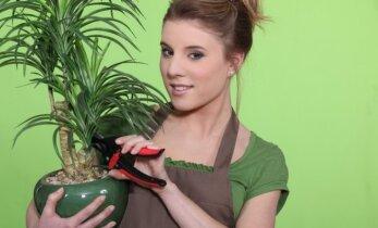 Namų puošybai jukos netikros palmės 3