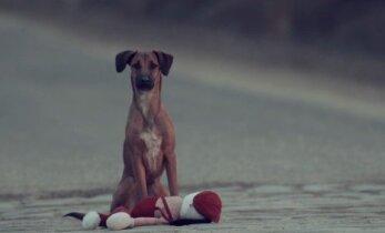 Sukrečianti reklama: vaiką sulygino su šunimi