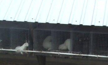 Gyvūnų teisių gynėjai gali likti nieko nepešę: žiaurūs vaizdai paviešinti per vėlai
