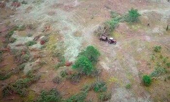 Gražiausiame Lietuvos rezervate pjaunami visi medžiai iš eilės: miškininkai sako, kad tai būtina
