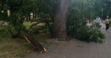Vilniečių pamėgtame parke pavojingai lūžinėja medžiai