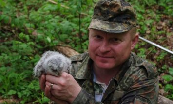 Su sužieduotu naminės pelėdos jaunikliu