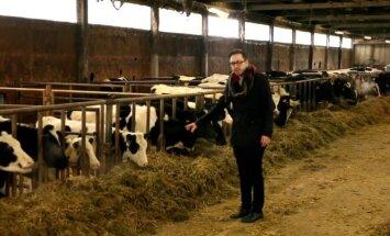 Dvi karvės ar visa ferma: kas vertingiau?