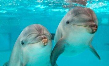 Delfinai Lietuvos jūrų muziejuje