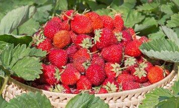 Birželio darbai sode ir darže: svarbiausi patarimai, kad derlius ir aplinka džiugintų