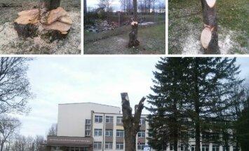 Teritorijoje prie Prezidento Jono Žemaičio gimnazijos pasidarbuota iš peties - iš medžių likę vaiduokliai