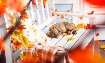 """<span style=""""color: #ff0000;"""">GALERIJA:</span> nebrangios idėjos, kaip namuose sukurti rudeniškai jaukią nuotaiką"""