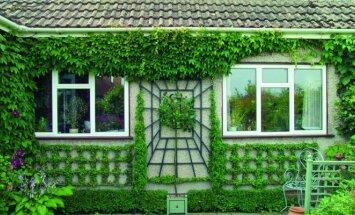 Kūrybiškas sprendimas: namas, vijokliais apaugęs