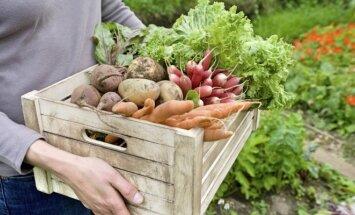 3 gudrybės, kaip valgyti daugiau daržovių
