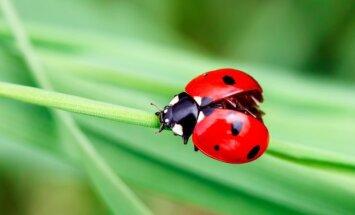 5 vabzdžiai, kurie yra nepamainomi pagalbininkai sode ir darže