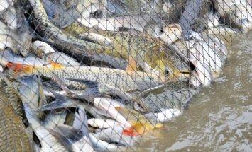 Žvejyba tinklais žvejui mėgėjui yra draudžiama